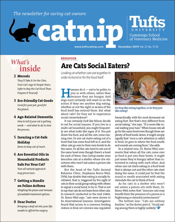 Catnip cover