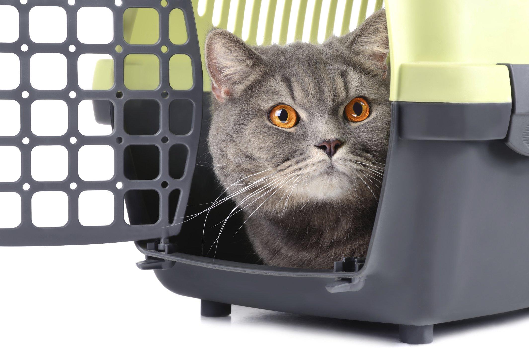 cat in crate