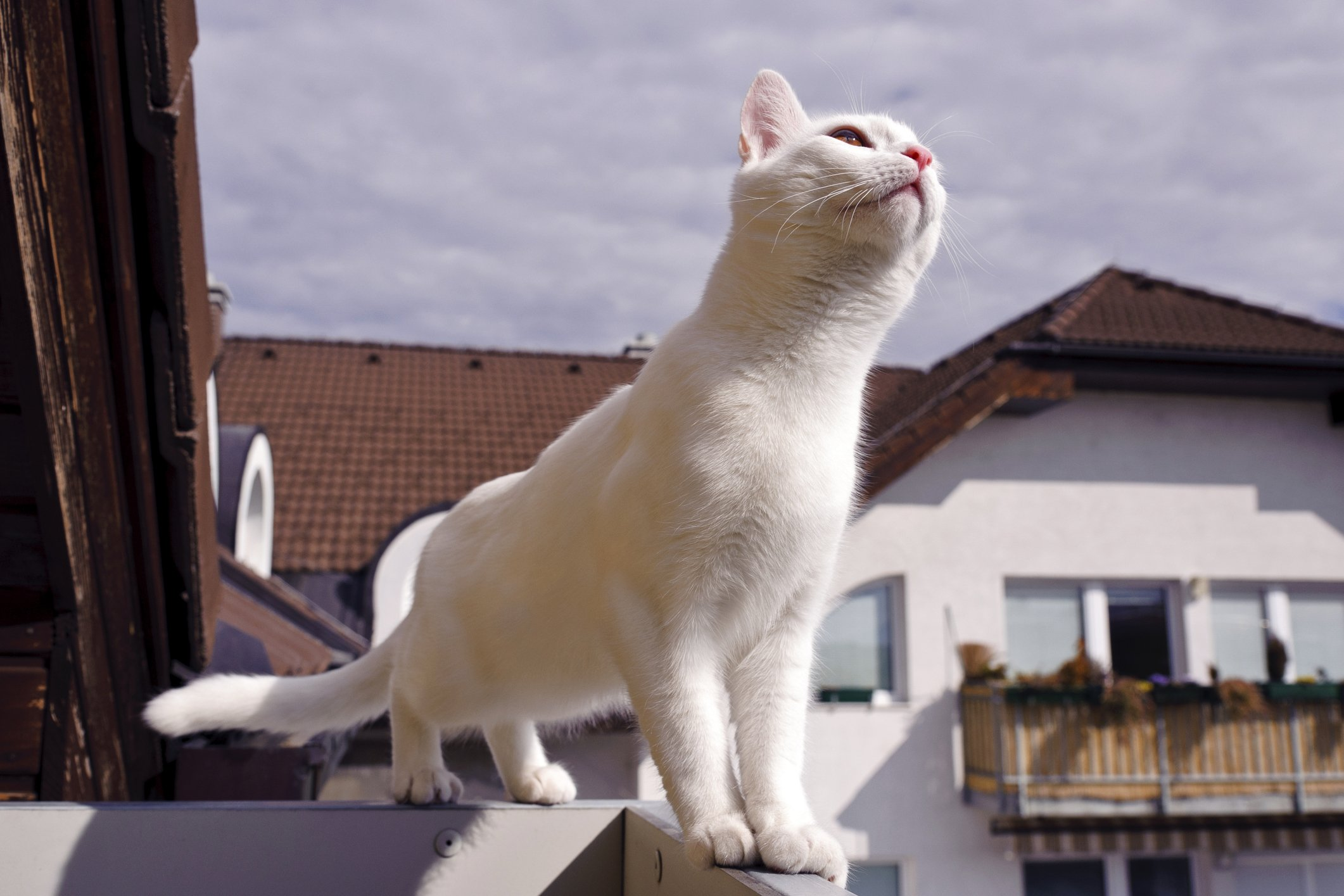 solar burns on cats