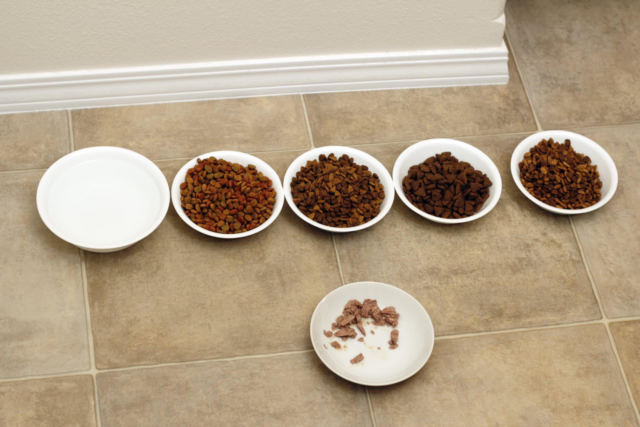 cat food tests
