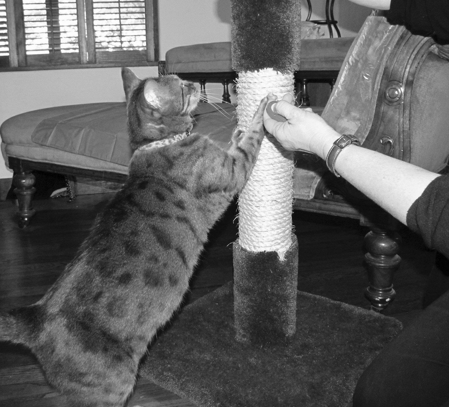 training cat not to scratch furniture