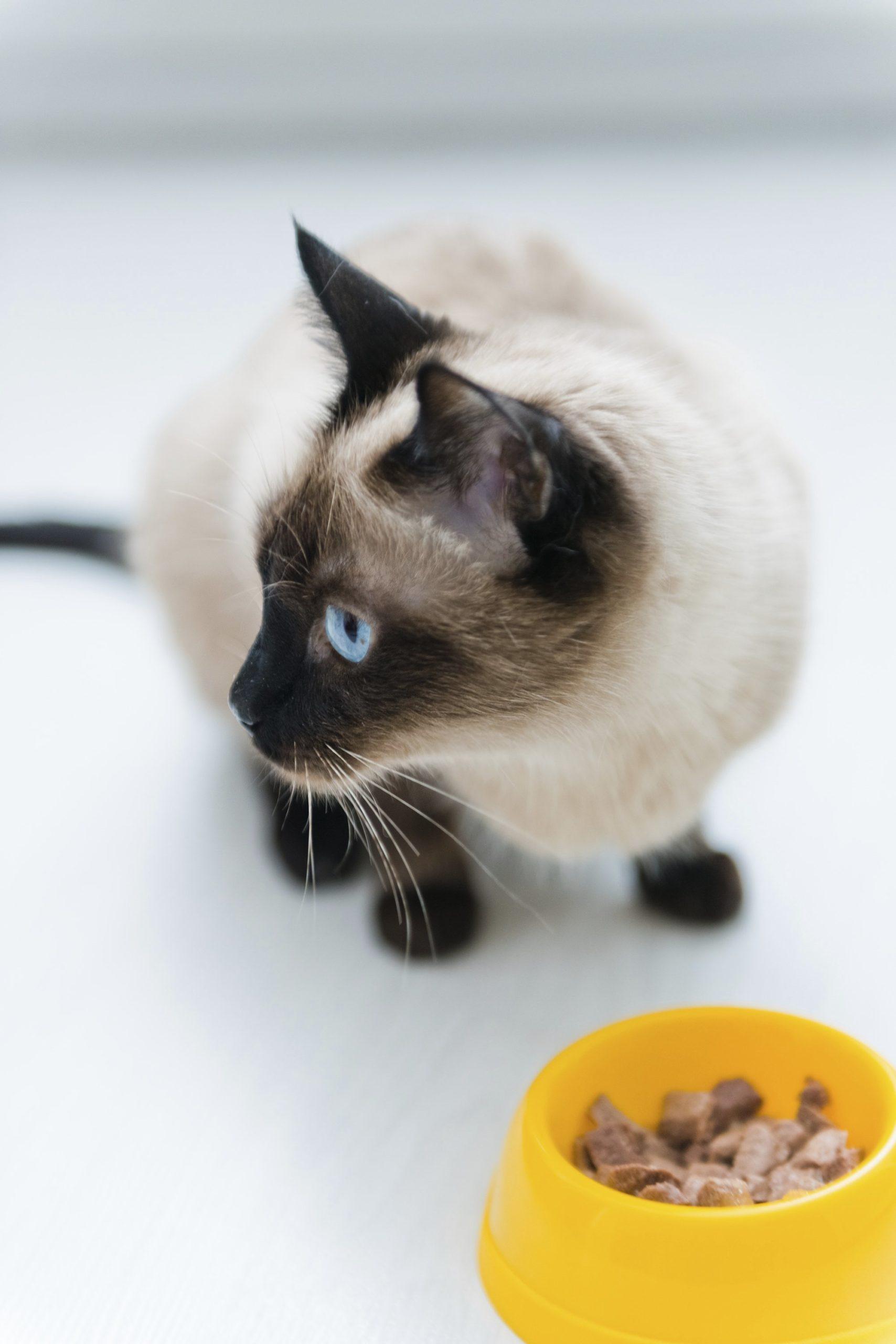 hepatic lipidosis in cats