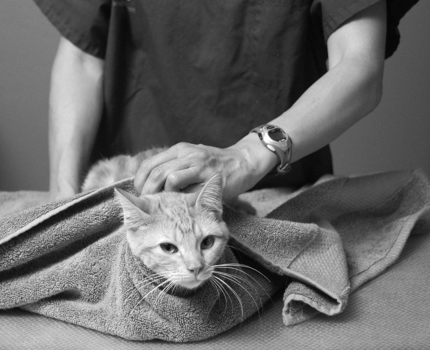 giving cat medication