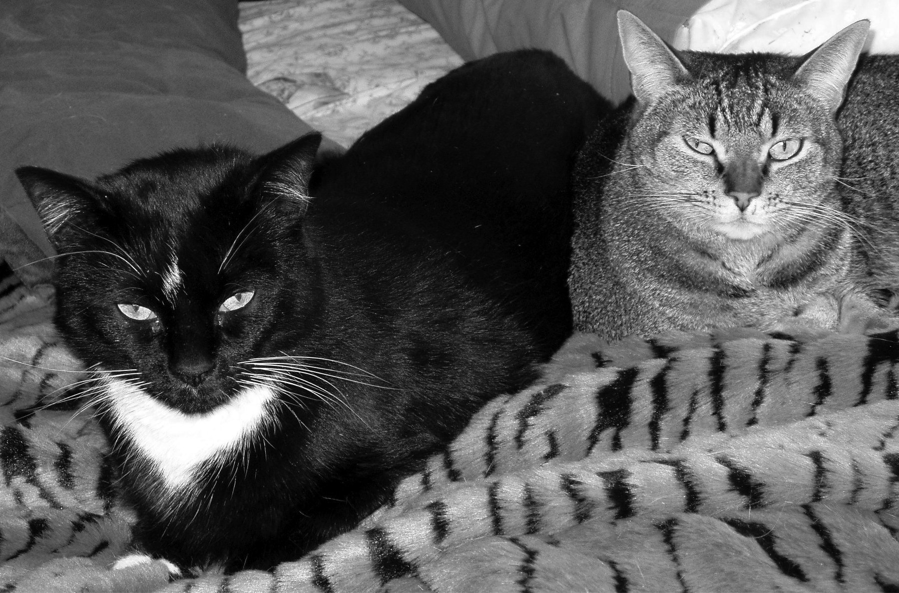 hypothyroidism in cats
