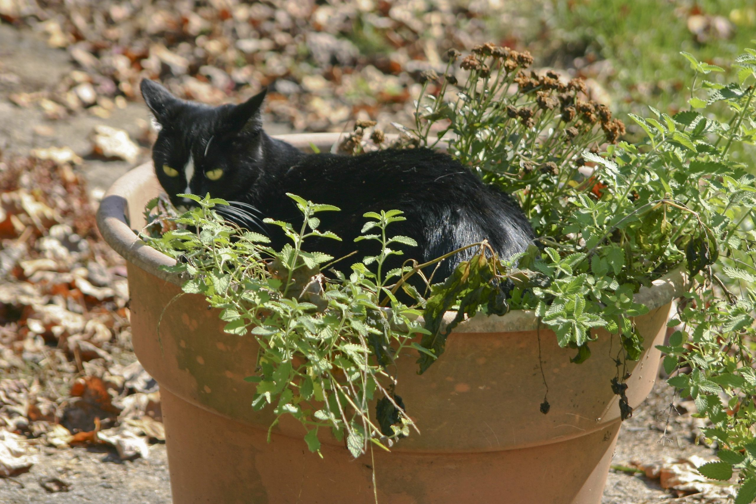 cat in flower pot