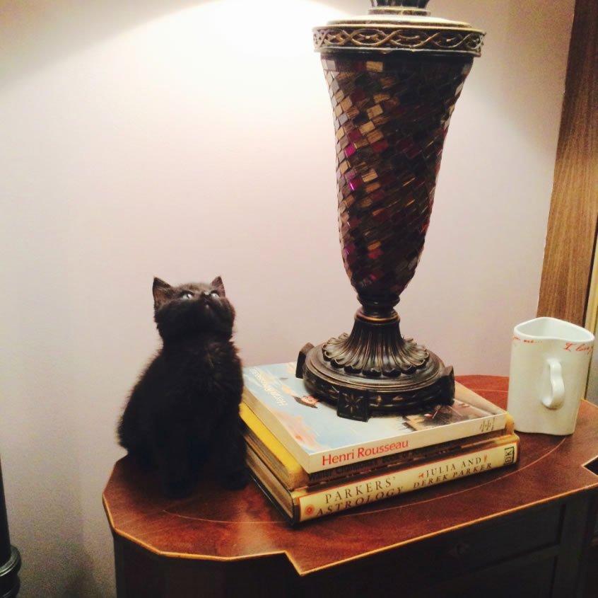Cat near lamp