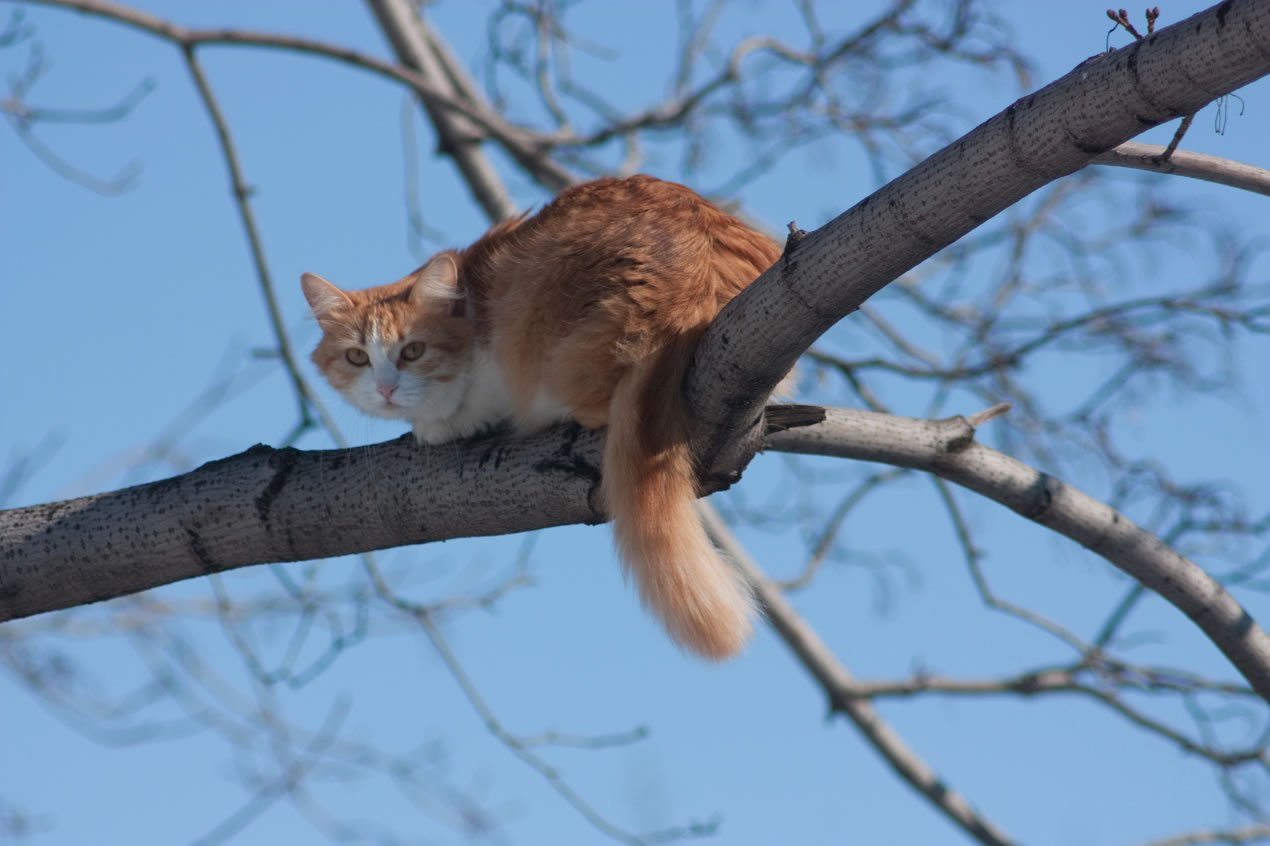 Cat on top of tree