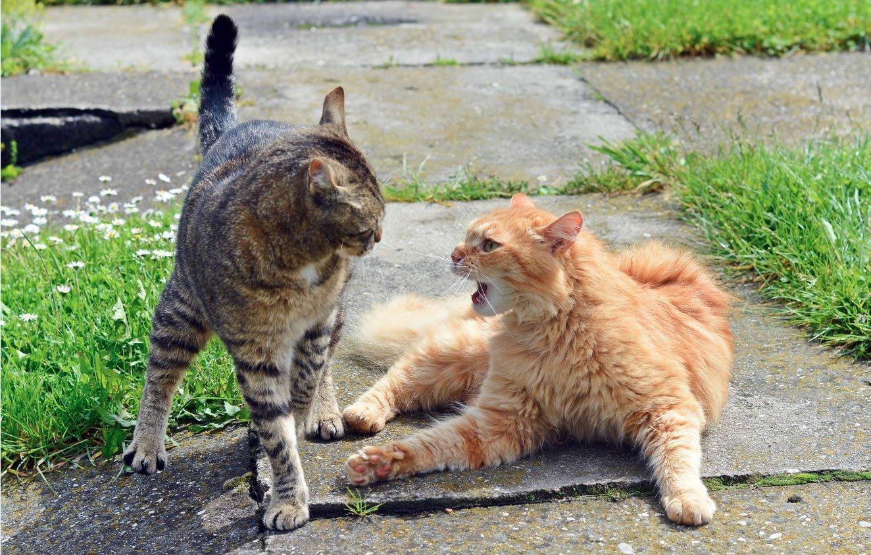 Cat Neutering 101