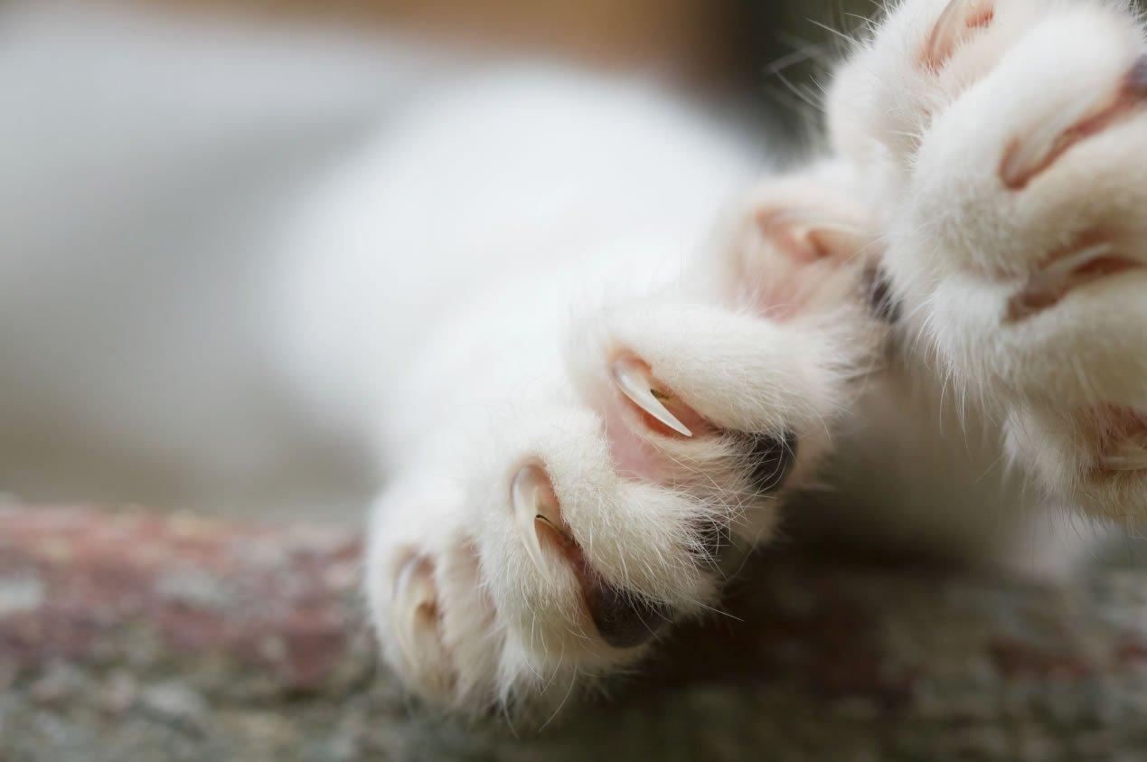 Cat's claws