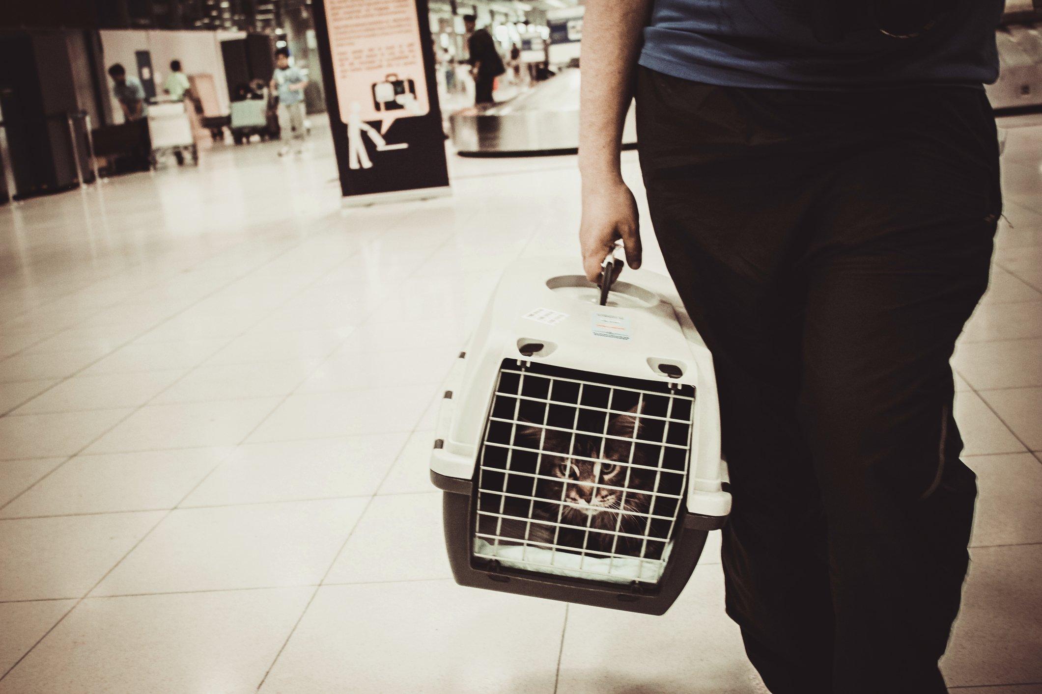 Cat travel airport