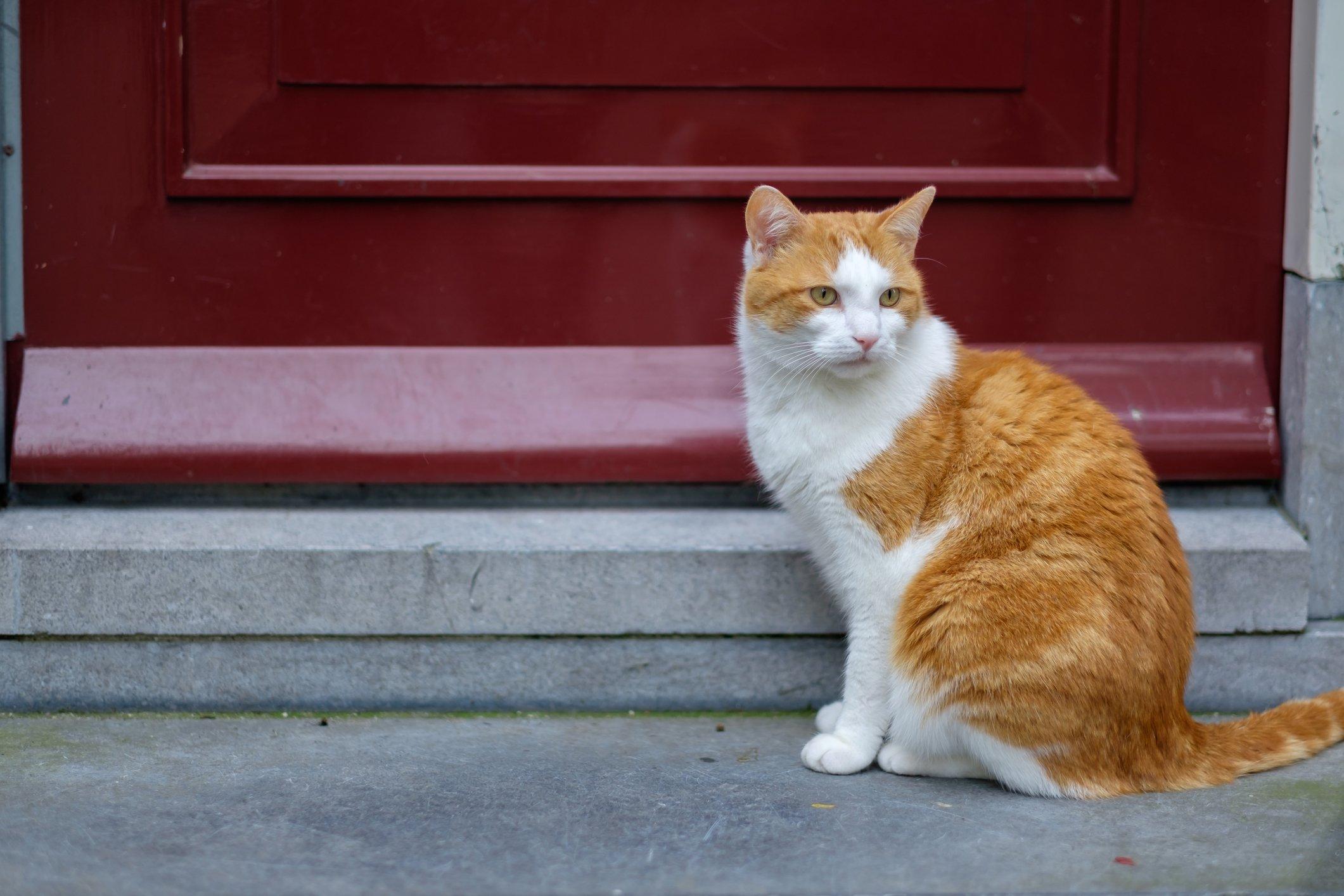 neighborhood stray cat
