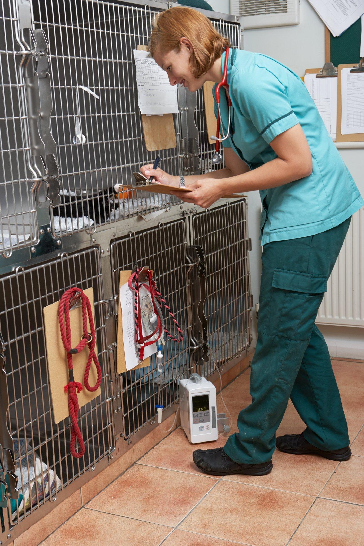 anesthesia veterinary clinic