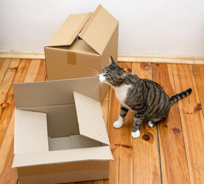 Cat with boxes