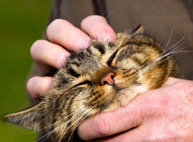 Rubbing a cat head