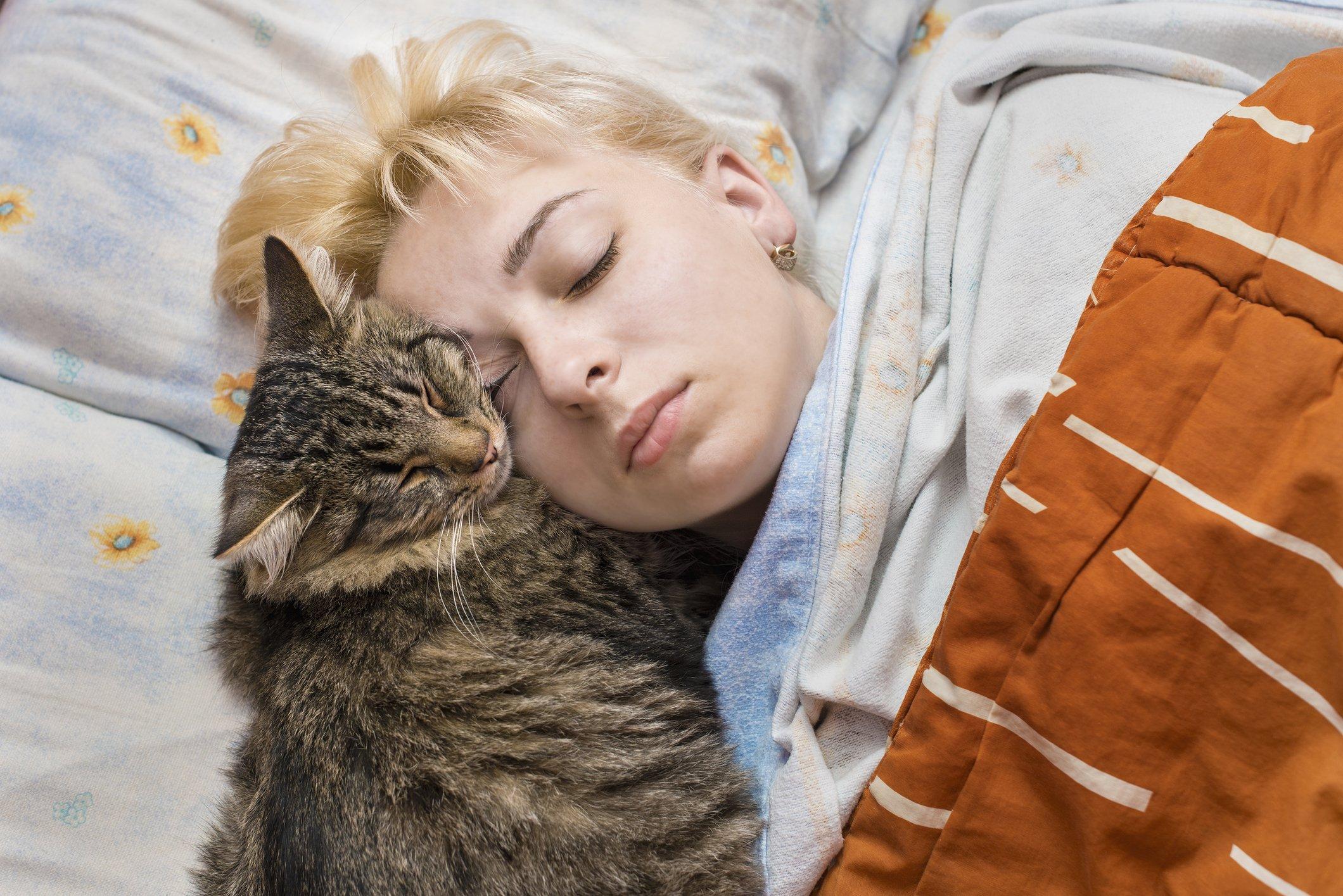 Cat taking nap