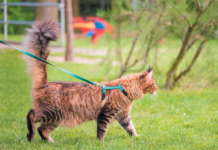 Cat wearing harness