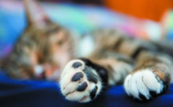 Cat Paws