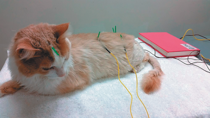 More and more pet health insurance companies are now covering acupuncture