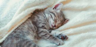 It's often more of a cat nap than a deep sleep.