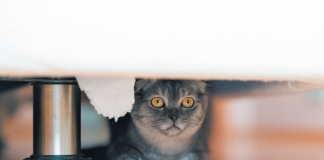 If a cat is super-fearful all the time, something is wrong;