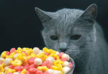 Many foods and treats that don't seem high in sodium contain too much for a cat on a reduced-sodium regimen.