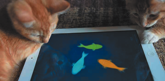 Cats and fish.