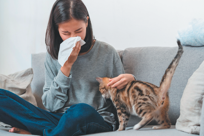 What if the food you fed your cat made you less allergic to her?