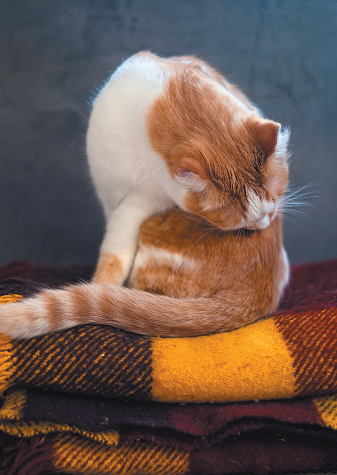 If your cat's in pain, she might not be able to do the twisting and bending neccessary for self-grooming.