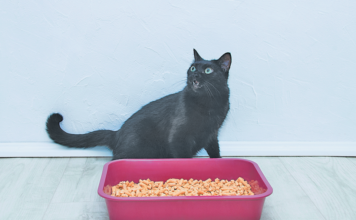 If he balks at using the litter box, it may be the litter that she objects to.
