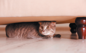A cat who always keeps away from the action needs help feeling more comfortable in your home.