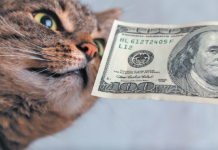 Without health insurance for your cat, expect to part with lots of $100 bills over the course of his lifetime.