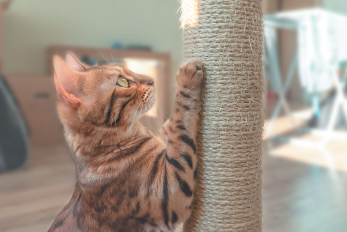 Cats like vertical scratching posts, but it's good to have two or three different types in the house, including a horizontal one.