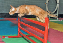 Yup, cats can be taught to do this — and enjoy it!