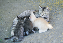 Newborn kittens can't hold their body heat. Their mothers curl around them to keep them warm.