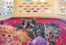 With a blanket and toys, a cat carrier becomes a fun place to hang out.