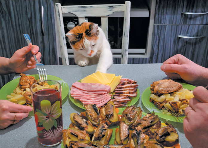 Does your cat think your mealtime is her mealtime?