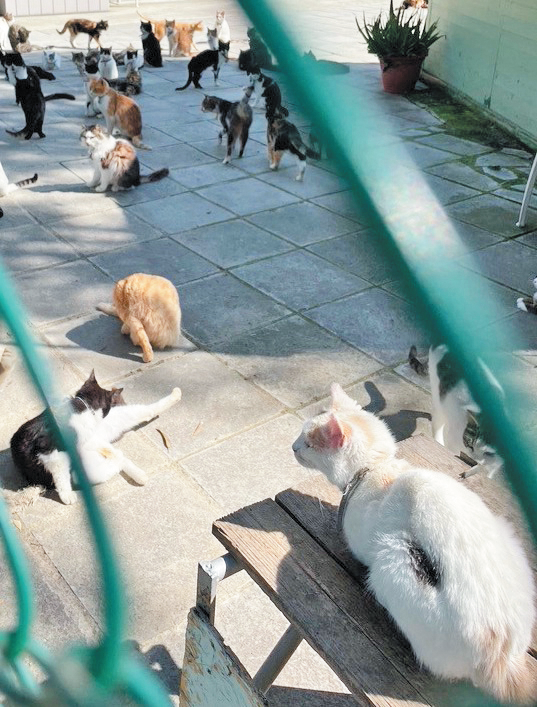 Some of Cypress's million-plus cats lounging in a courtyard.