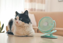No need to put on a fan. He will find a shady spot to keep cool.