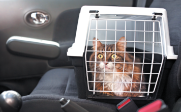 Some cats get pretty severe motion sickness.