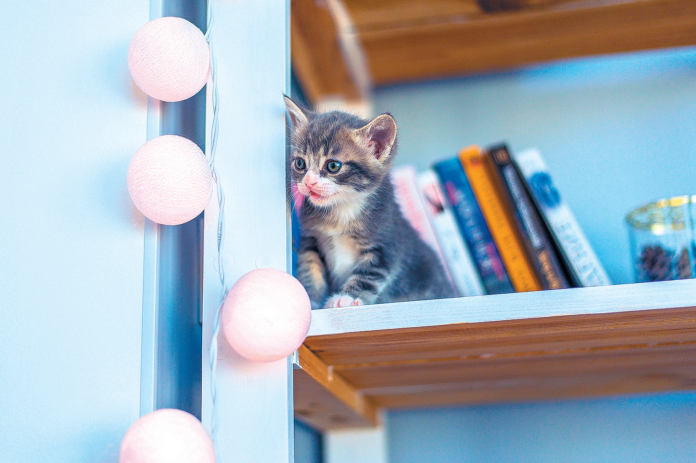 High up is where they like to be, even from a very young age.