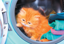 Letting a cat anywhere near a clothes dryer is a bad idea.
