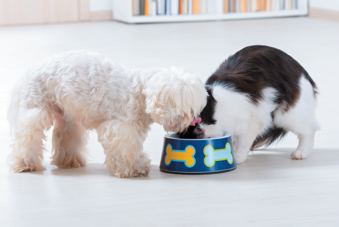 It is a really bad idea to let your cat regularly eat dog food rather than her own diet.