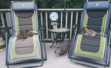 Tim Watters' three cats, Nemo, Muzzy, and Choo-Choo, are fine outside as long as they're not too close to the mosquito repellent diffuser.