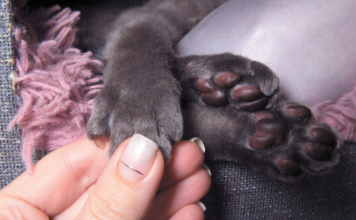 It's important to gradually adjust your cat to letting you examine her paws.