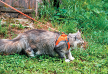 There are safe ways for your cat to be outside.