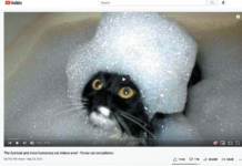 """When you search for """"funny cat videos"""" on YouTube, things like this pop up. Does it look like the cat finds it funny?"""